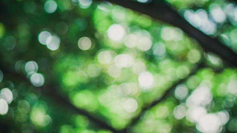 Árvore Bokeh imagem de stock