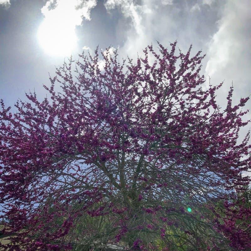 Árvore bonita foto de stock royalty free