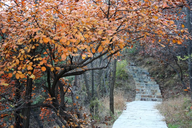 Árvore bonita foto de stock
