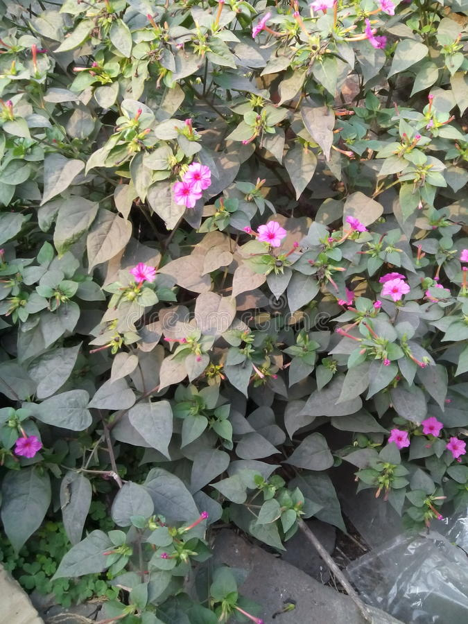 Árvore bonita da flor fotos de stock