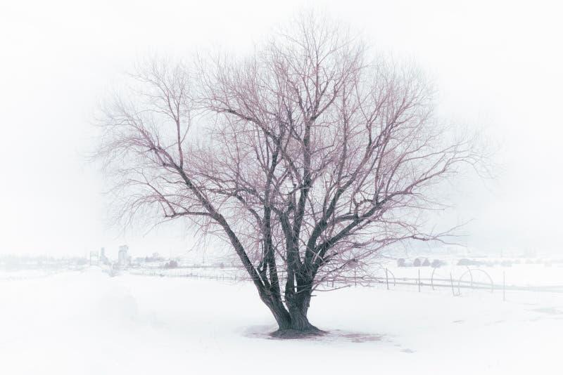 Árvore bonita do inverno na névoa foto de stock