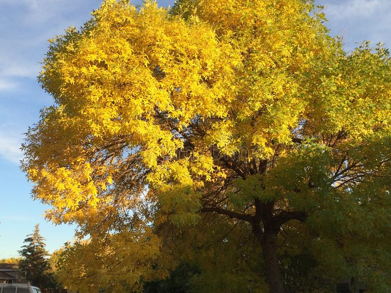 Árvore bonita do outono imagem de stock royalty free