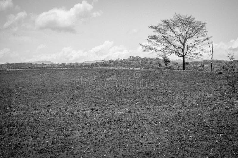 Árvore branca preta imagens de stock royalty free