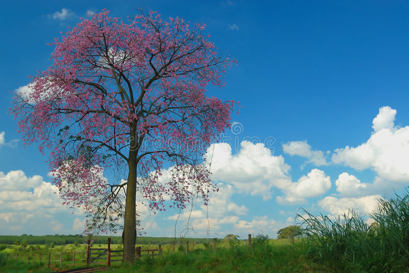 Árvore, céu e nuvens foto de stock royalty free