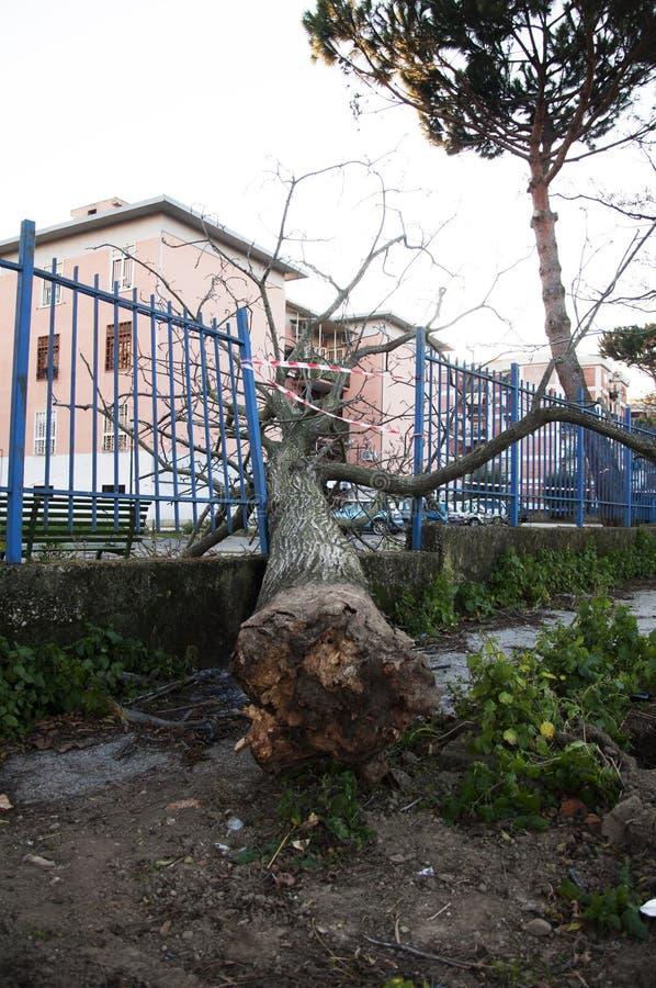 A árvore caída 2 foto de stock royalty free