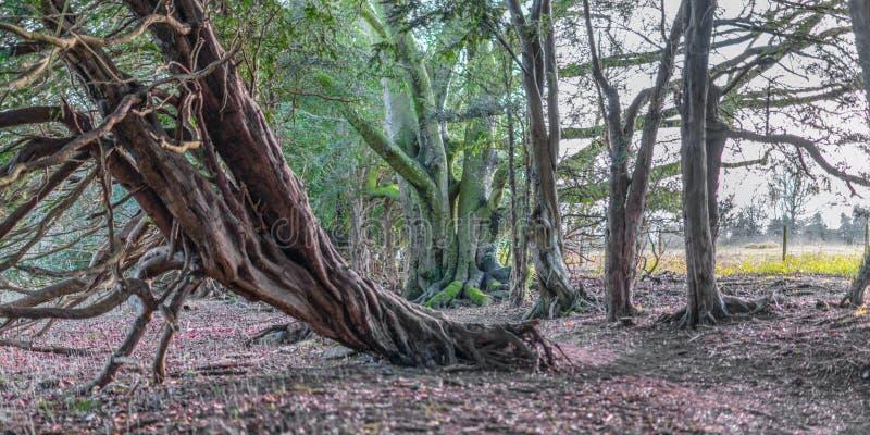 Árvore caída imagem de stock royalty free