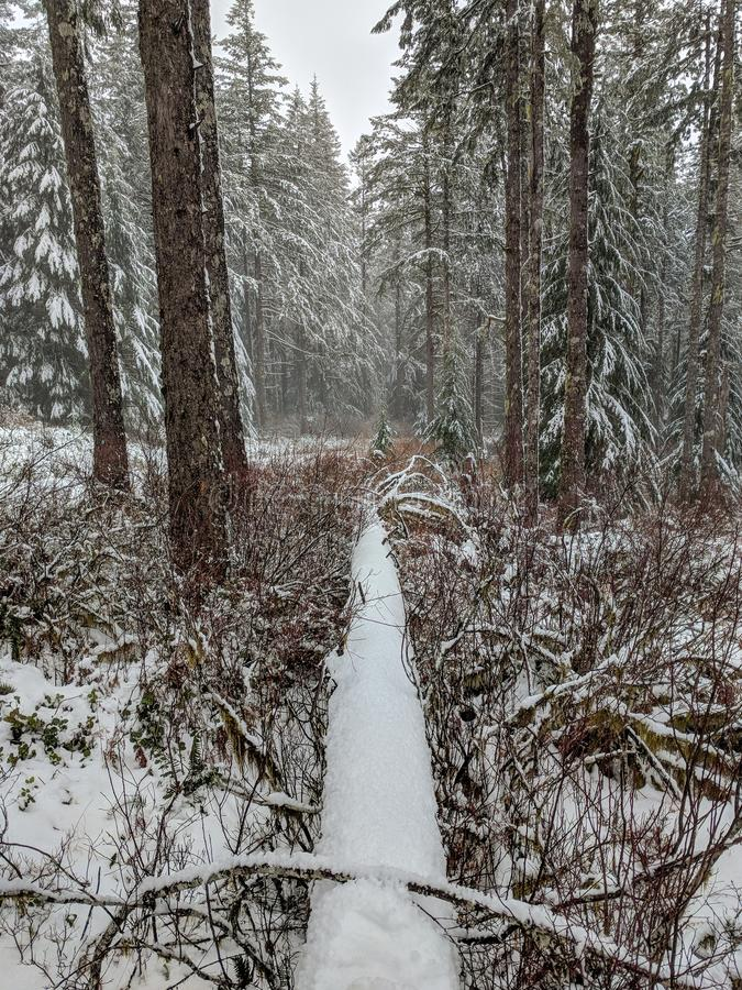 Árvore caída coberta na neve nas madeiras imagens de stock