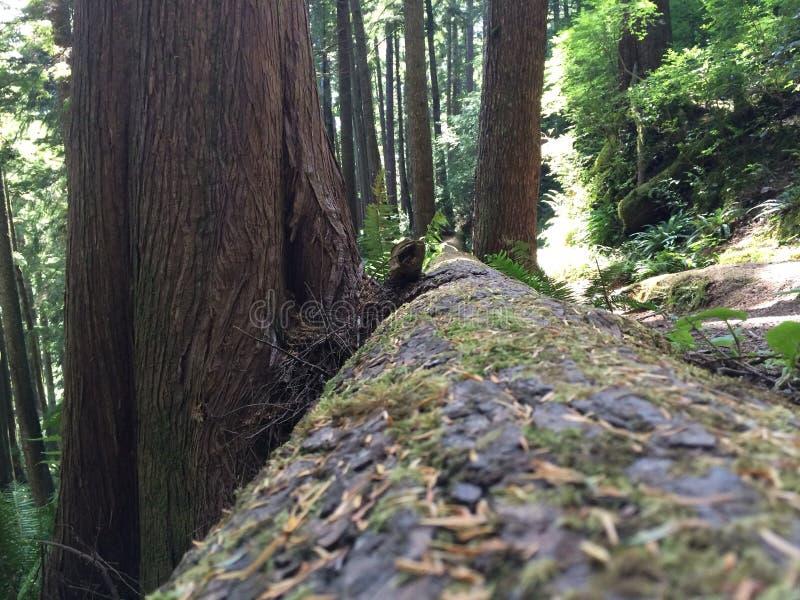 Árvore caída com musgo imagens de stock