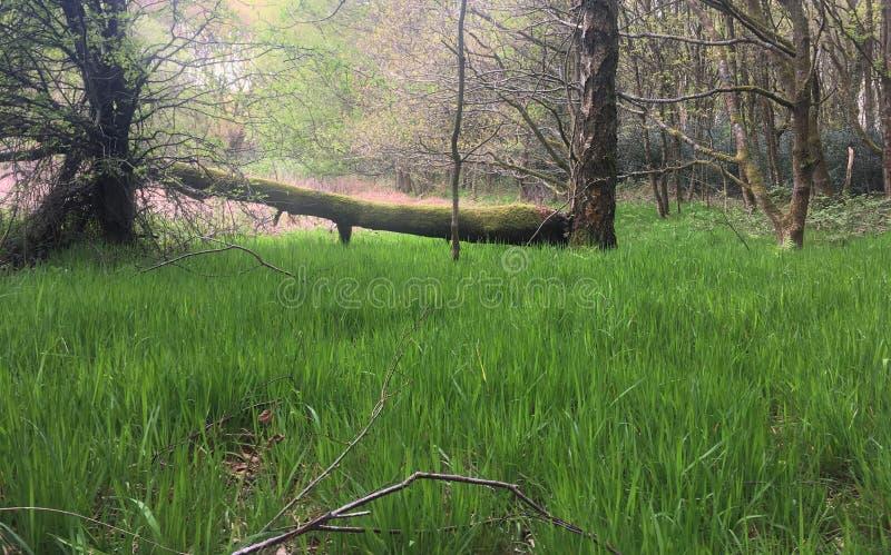 Árvore caída da grama verde com musgo imagens de stock