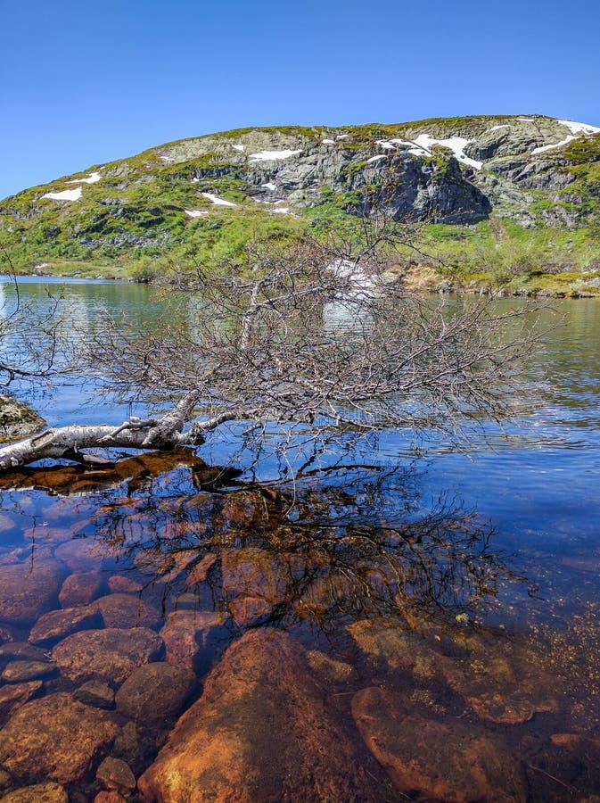 Árvore caída em um lago da montanha em Noruega imagens de stock royalty free