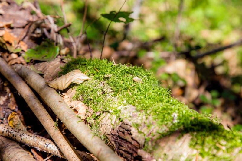 Árvore caída na floresta foto de stock