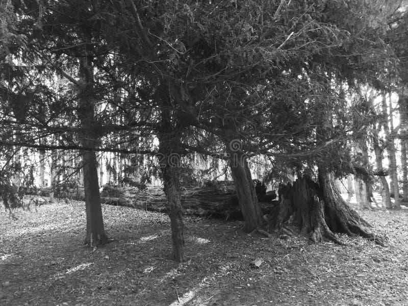 Árvore caída nas madeiras foto de stock