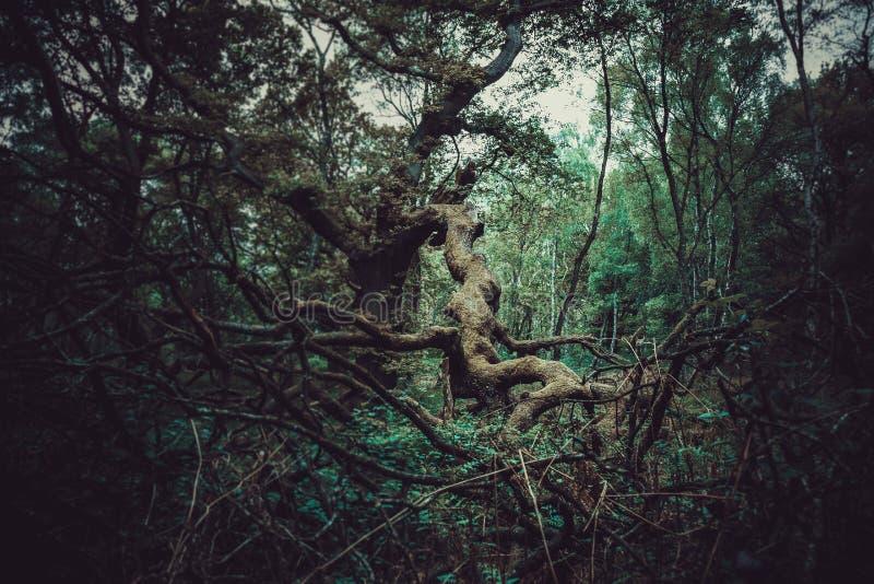 Árvore caída 1 fotos de stock