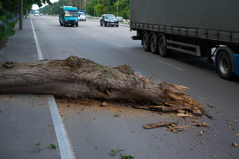 A árvore caiu na estrada Perigo ao tráfego imagens de stock royalty free