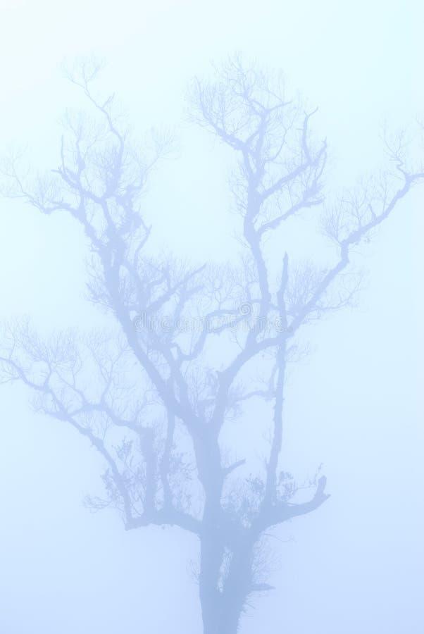Árvore calva no inverno sob a névoa profunda imagens de stock royalty free