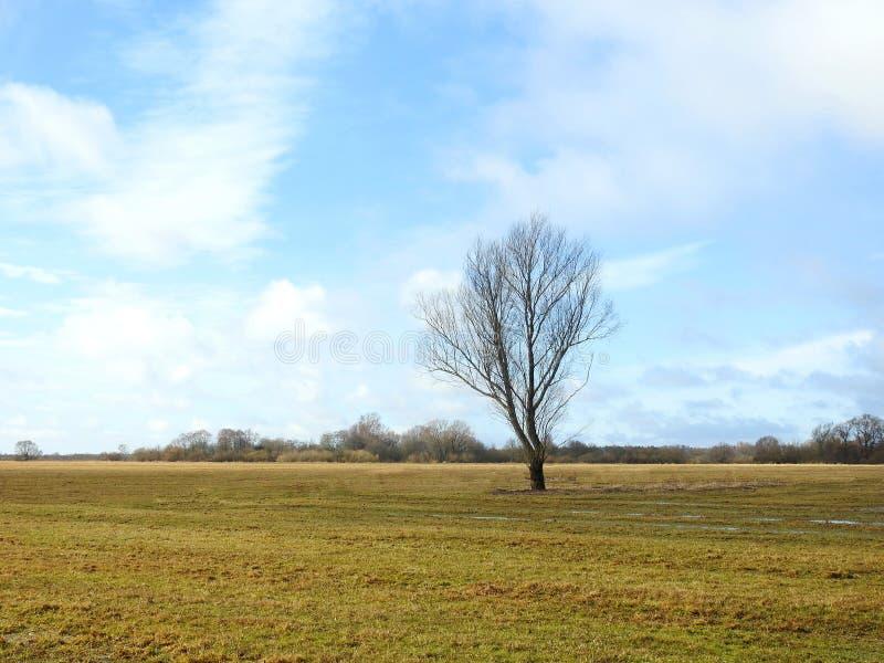 Árvore, campo da mola e céu nebuloso bonito, Lituânia fotos de stock