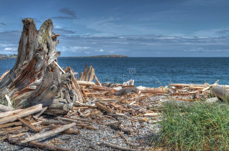 Árvore castanha e cinzenta perto da massa d'água foto de stock royalty free