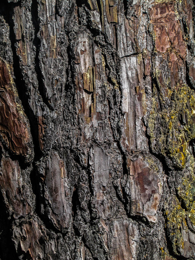 Árvore stock images