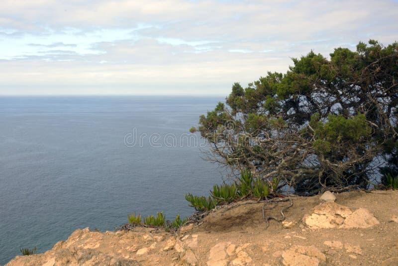 Árvore coa muitos ramos verde na perspectiva de um mar do céu nebuloso e da turquesa Oceano Atlântico, rochas no cabo Roca, Portu fotos de stock