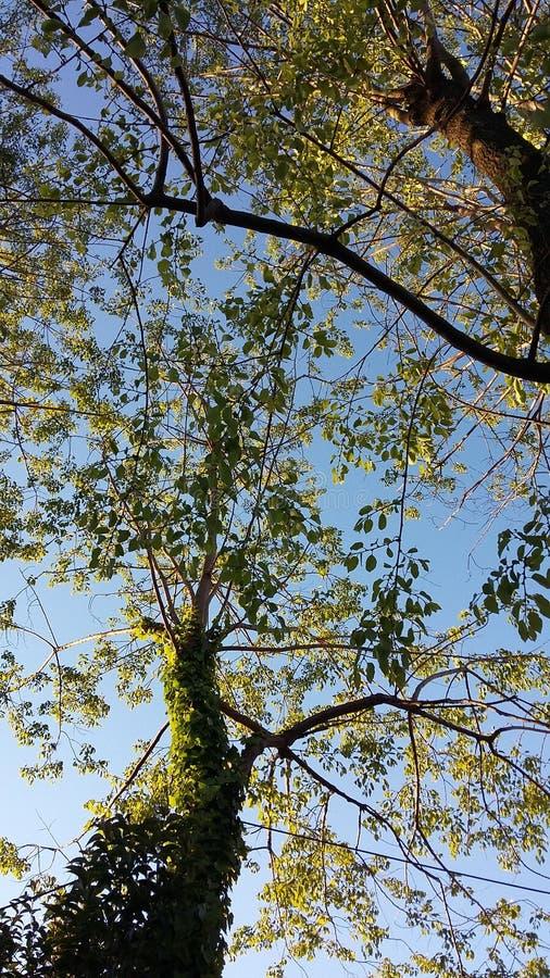 Árvore coberta foto de stock