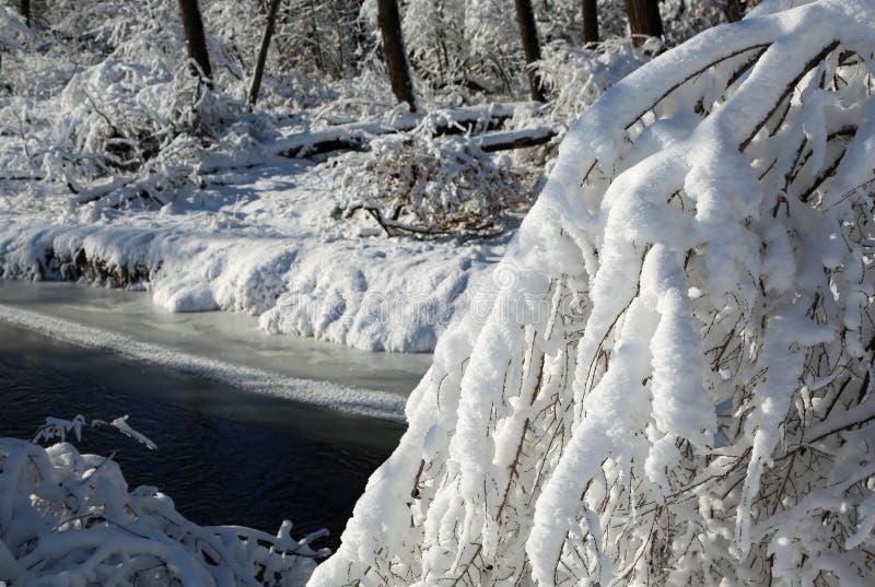 Árvore coberta com a neve no rio fotografia de stock