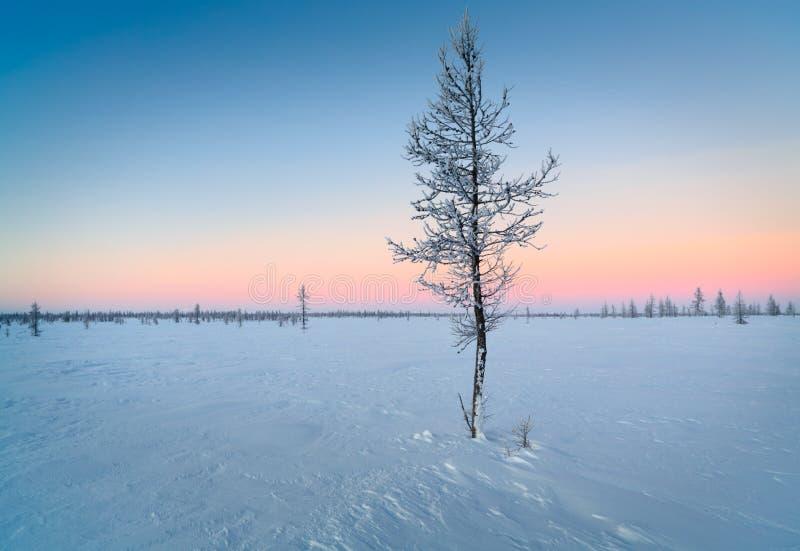 Árvore coberta fria do inverno mágico imagem de stock