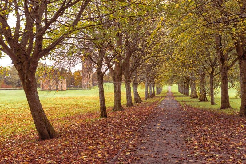 A árvore cobriu a caminhada da floresta com as ruínas antigas de ruínas do castelo no fundo foto de stock royalty free