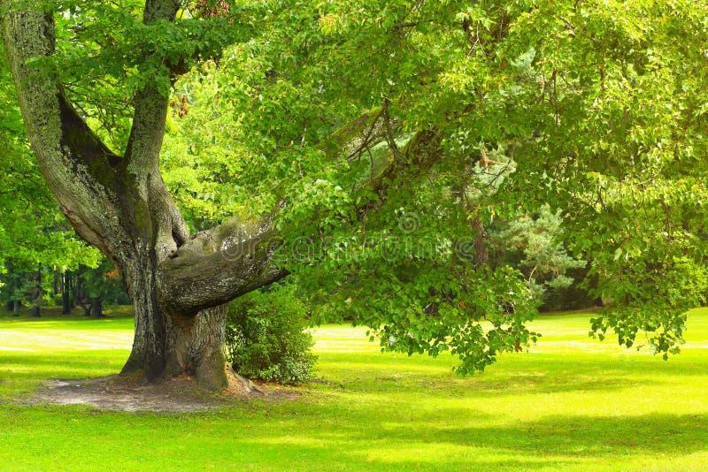 Árvore com as folhas saturadas verde fotografia de stock
