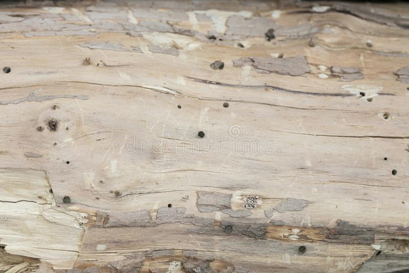 Árvore com besouros de casca imagens de stock royalty free