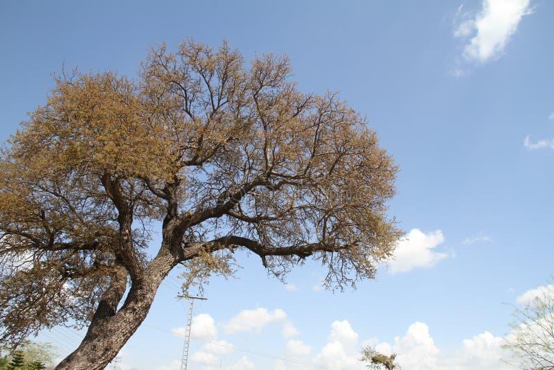 Árvore com céu azul e nuvens foto de stock royalty free