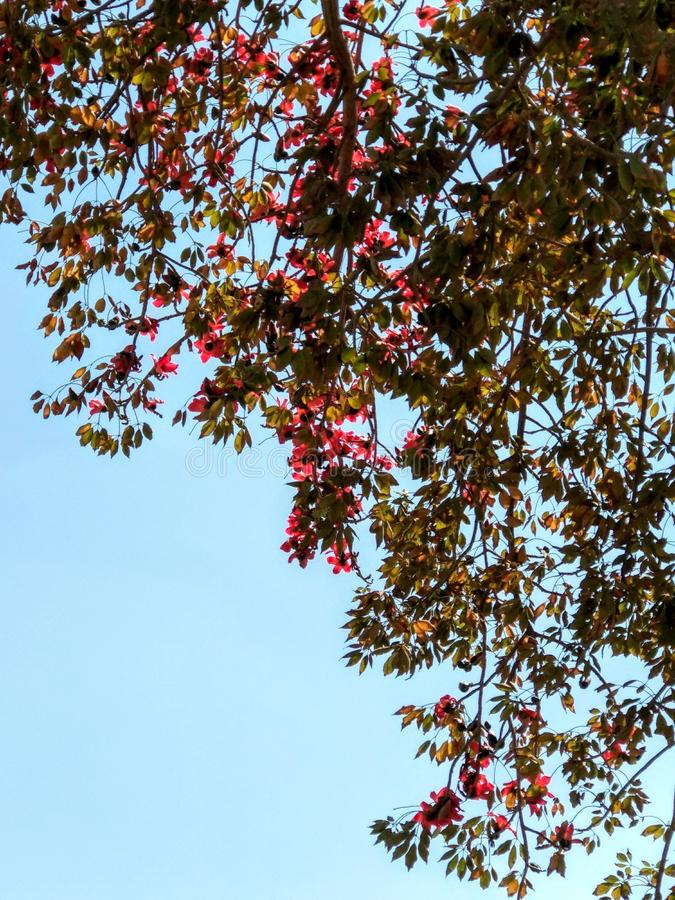 Árvore com flores cor-de-rosa fotos de stock royalty free