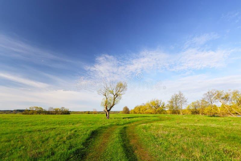 Árvore com folhas verdes imagem de stock