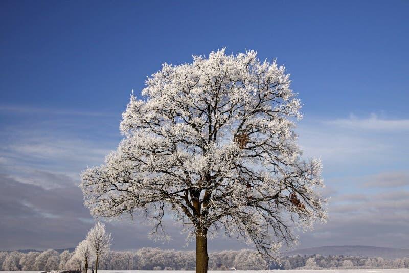 Árvore com hoarfrost, Laer ruim, Alemanha imagens de stock royalty free