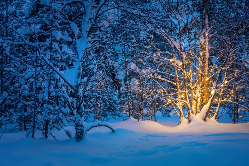Árvore com luzes mornas da festão na floresta nevado do inverno da noite imagens de stock royalty free