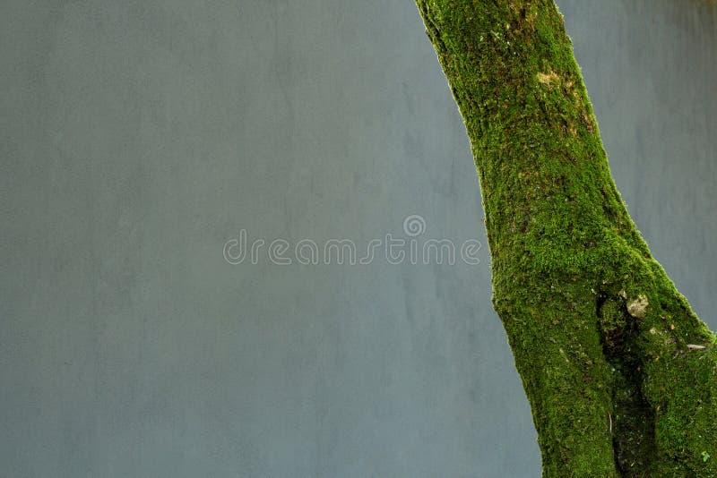 Árvore com musgo fotos de stock