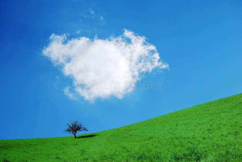 Árvore com nuvem foto de stock royalty free