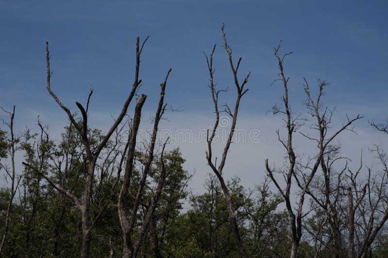 Árvore com o céu azul da nuvem fotos de stock