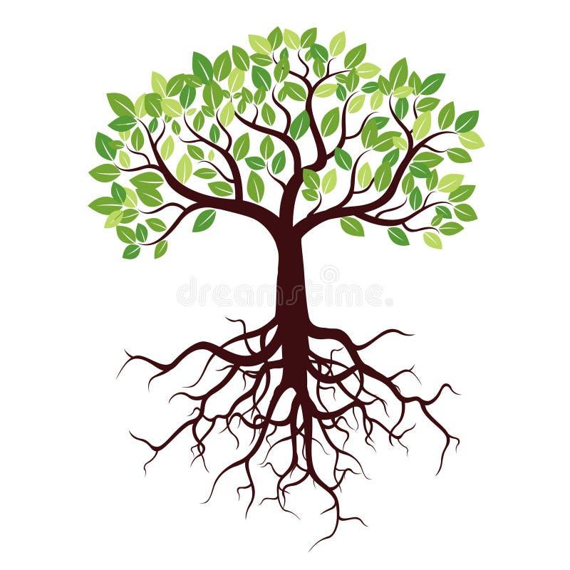 Árvore com raizes e folhas ilustração royalty free