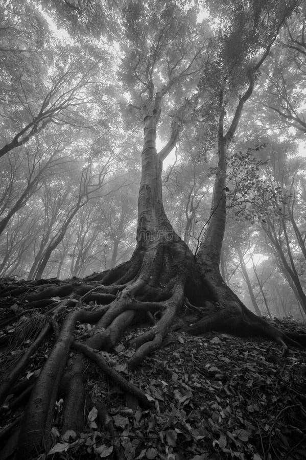 Árvore Com Raizes Molhadas Em Uma Floresta Imagens de Stock