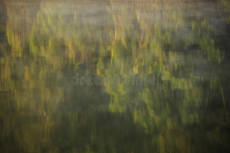 Árvore com reflexo da água imagem de stock