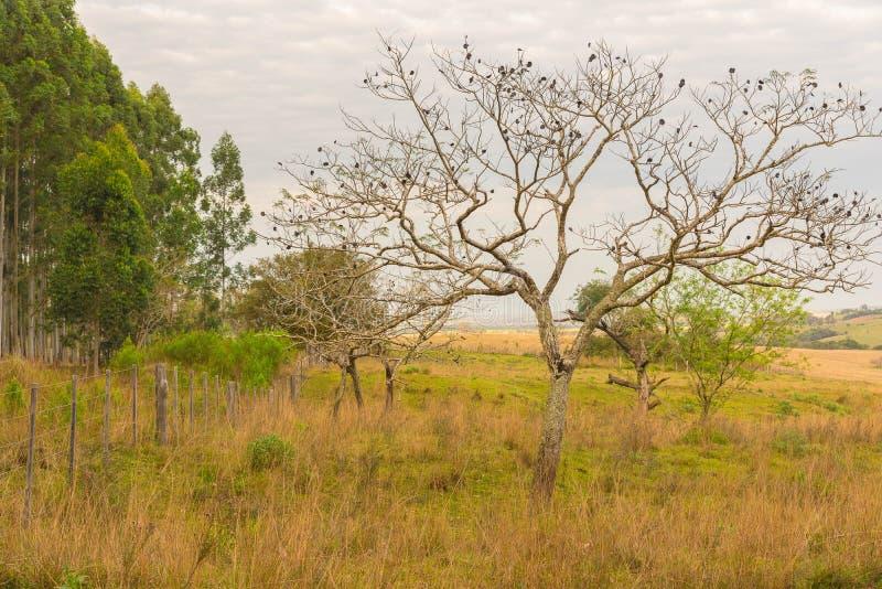 A árvore com seus frutos escuros jpg imagem de stock