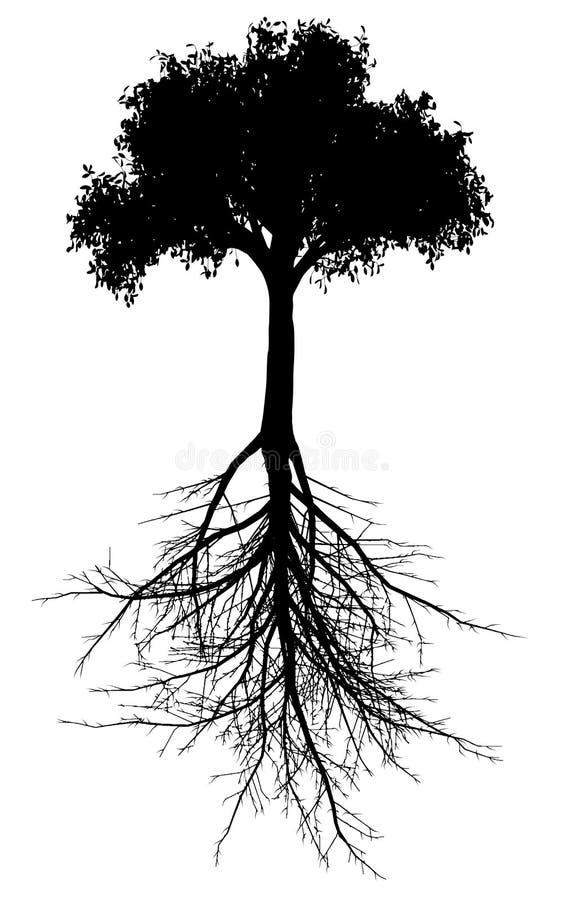 Árvore com silhueta das raizes ilustração do vetor