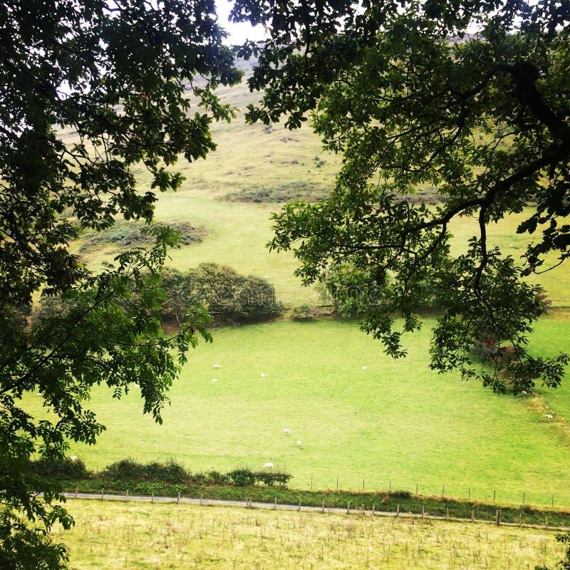 Árvore com uma vista imagens de stock