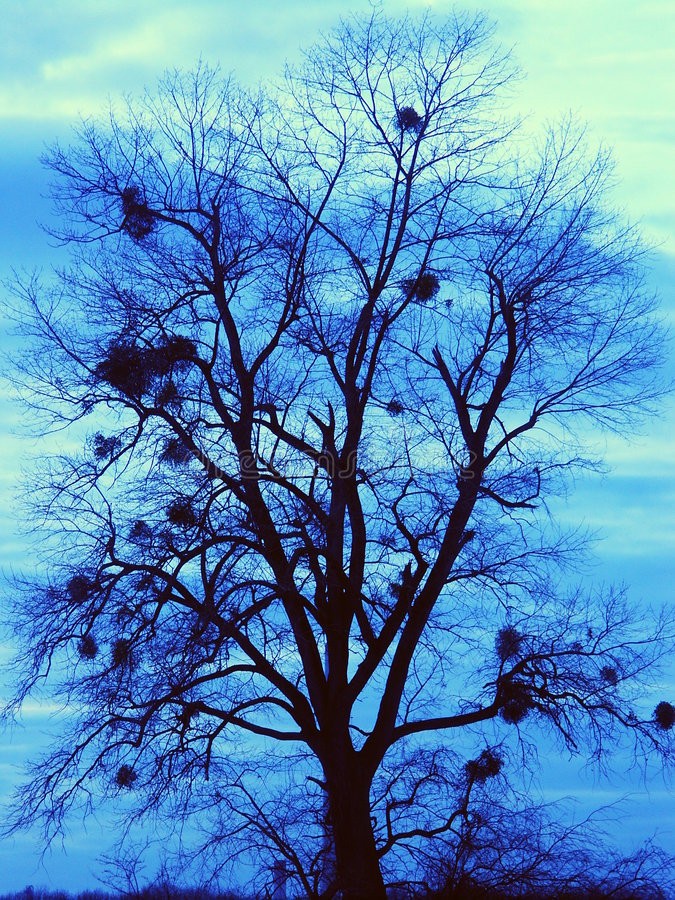 Árvore com viscos imagens de stock