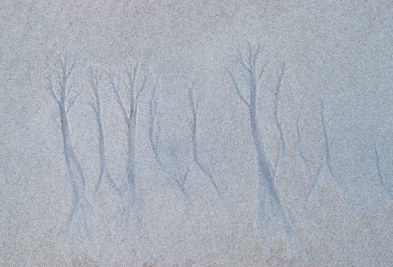 Árvore como as formas criadas naturalmente na areia pela água do mar em Sandy Beach - teste padrão e textura abstratos fotografia de stock
