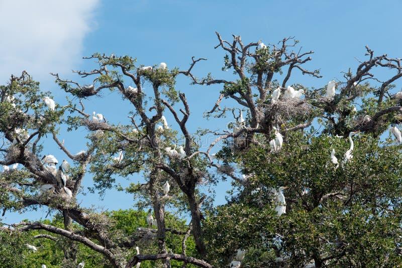 Árvore completamente dos Egrets e das cegonhas brancos fotos de stock royalty free