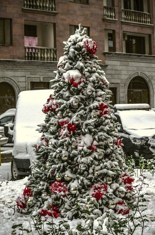 Árvore conífera que cresce na rua, decorada com decorações do Natal, as bolas brancas, a poinsétia vermelha e as festões foto de stock