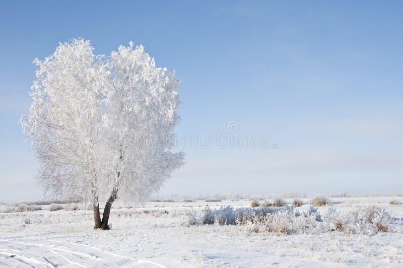 Árvore congelada fotos de stock royalty free