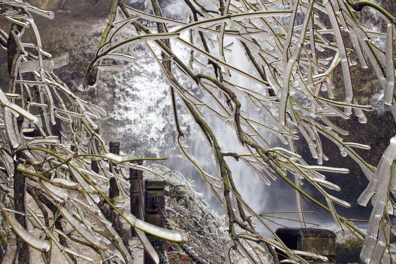 Árvore congelada ao longo de caminhar o trajeto no inverno fotos de stock royalty free