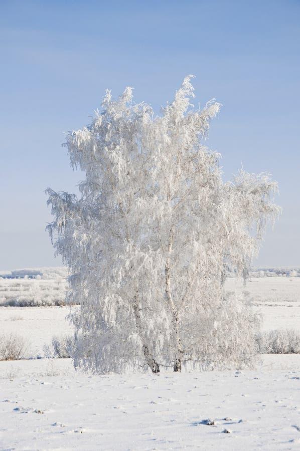 Árvore congelada no campo do inverno fotografia de stock royalty free